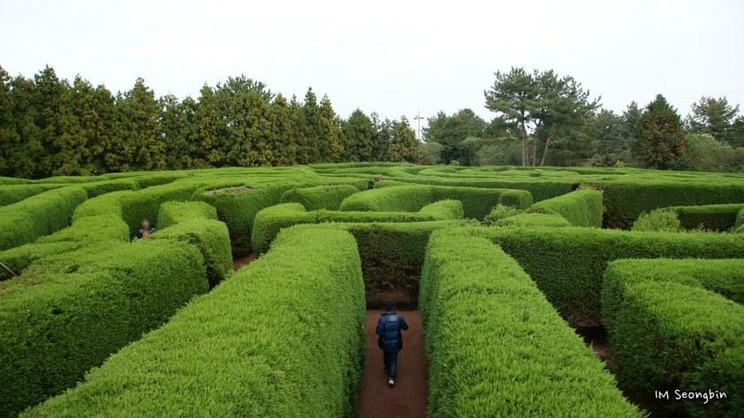 Maze (¹Ì·Î)